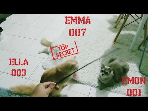 FUNNY CAT - CATS PLAY HIDE & SEEK . VIRAL TENDING MALAYSIA . LAWAK . KELAKAR .