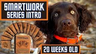 Boykin Spaniel Duck Dog Training With SMARTWORK Intro