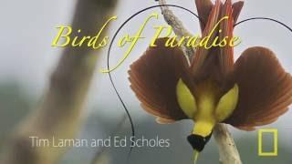Download Video Cendrawasih burung syurga by National Geographic MP3 3GP MP4