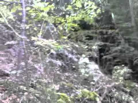 Forest (cam test huawei u8300)