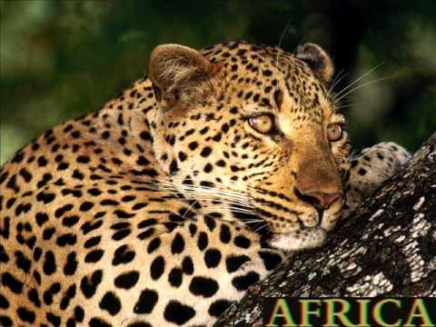 Franky Rizardo - Africa (R3hab & Ferruccio Salvo Remix)