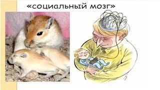 Поведенческая экология эволюционный подход к поведению животных - Крученкова Е .П