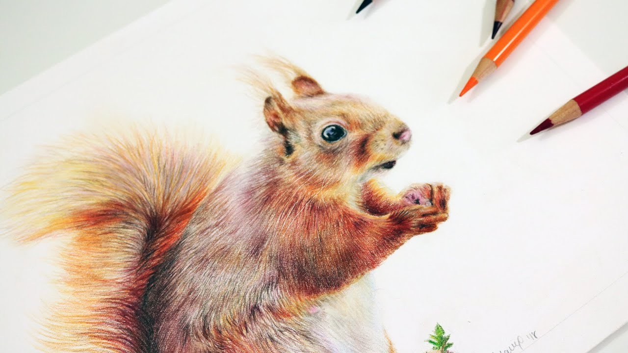 How to Draw a Squirrel with Colored Pencils | Step by Step ...