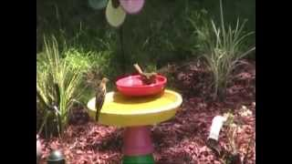 Birds Bathing In Diy Bird Flower Pot Bath