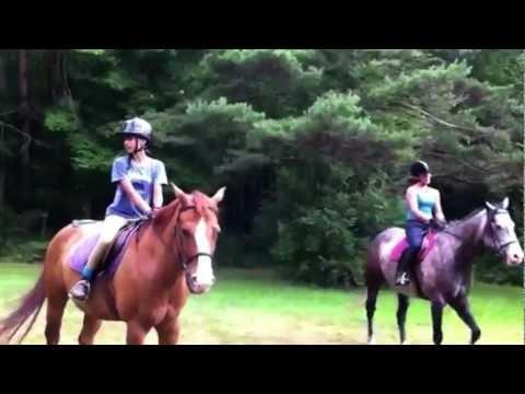 Summer Equine Management Internship