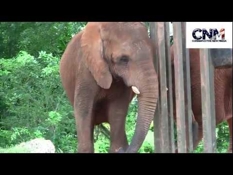 Big Elephants in 1080P HD at Miami Zoo - by John D. Villarreal