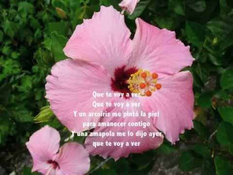 Amapola ~Juan Luis Guerra~ con letra~