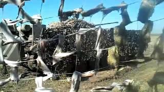 Клип-Волки АТО