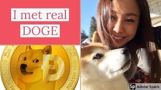 Interview with Dogecoin's model  dog, Kabosu chan!! thumbnail