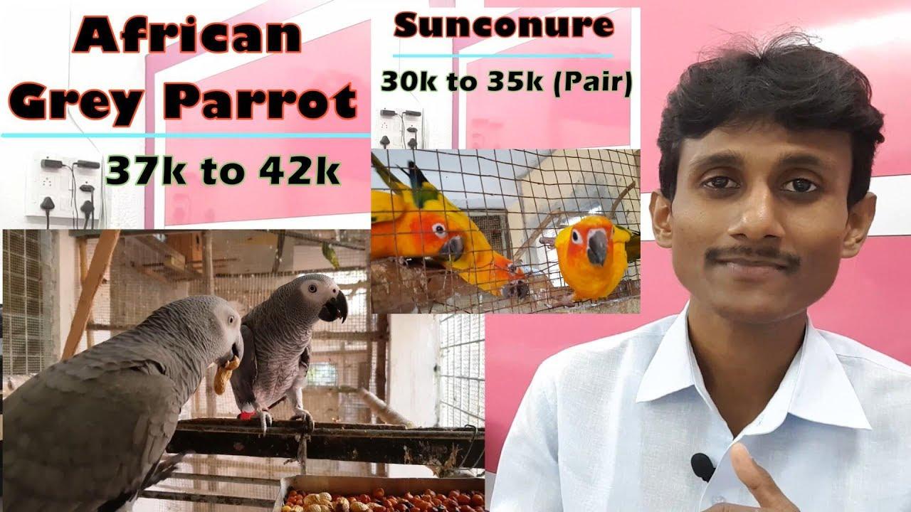 Parrot S Bird S Price Exotic Parrot S Bird S Buy And Sale Price In India Youtube