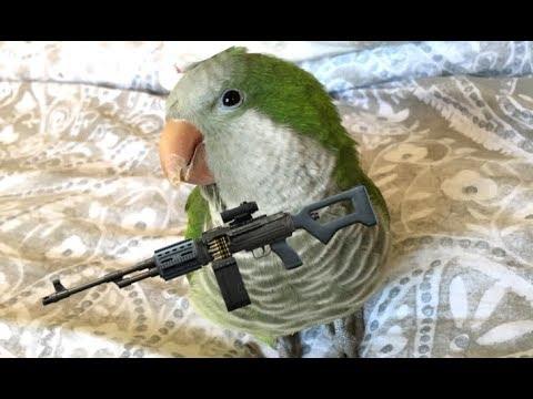 The Most Dangerous Bird