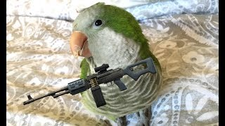 The Most Dangerous Bird