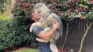 This Is Why You Get A Big Dog!