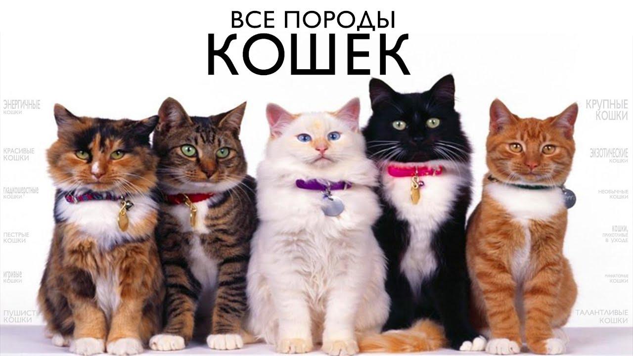 кошки все породы