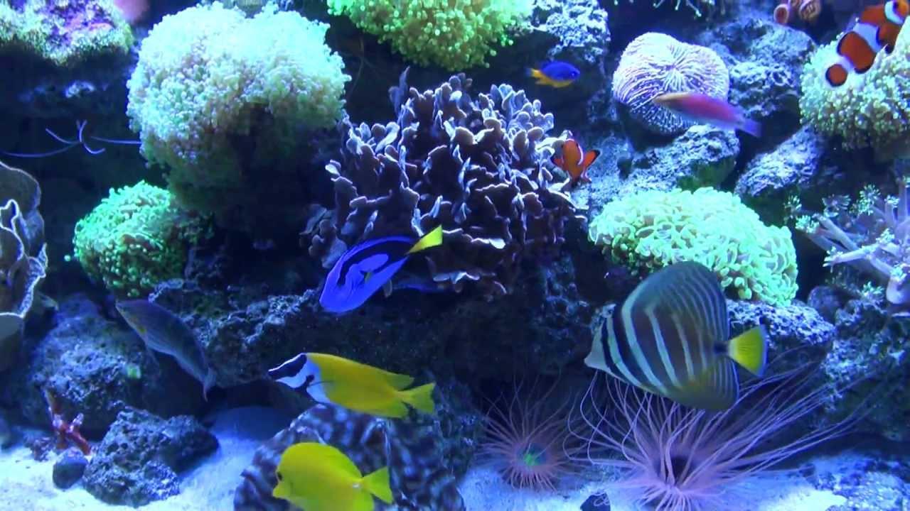 Rare Tropical Saltwater Fish Exotic SaltWate...