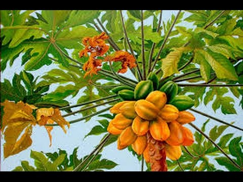 How to Grow Papaya - TvAgro By Juan Gonzalo Angel