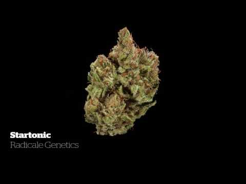 2016 Michigan Medical Cannabis Cup: CBD Flower Entries
