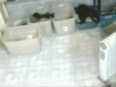 cat video: good litter box etiquette