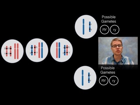 Chromosomal Inheritance