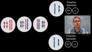 Download Mp3 Chromosomal Inheritance