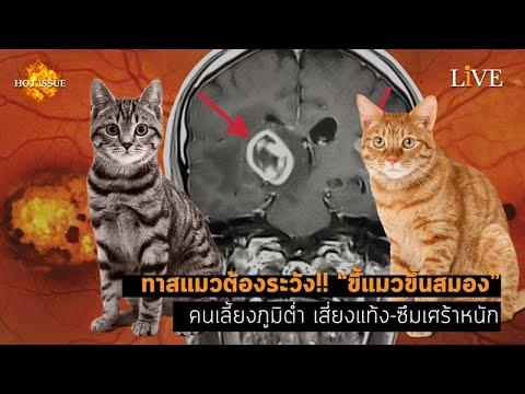 "[Hot Issue] ทาสแมวต้องระวัง!! ""ขี้แมวขึ้นสมอง"" คนเลี้ยงภูมิต่ำ เสี่ยงแท้ง-ซึมเศร้าหนัก"