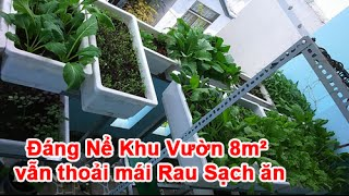 đng nể khu vườn 8m² vẫn thoải mi rau sạch ăn