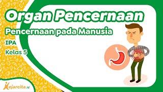 Jakarta, tvOnenews.com - Gejala gangguan pencernaan bisa meliputi perut tidak nyaman setelah makan, .