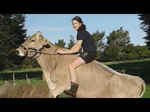 Thumbnail: Girl Trains Cow To Do Tricks When She's Not Allowed to Have Horse