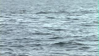 Whale Watching with Animal Communicator Pet Psychic Laura Stinchfield