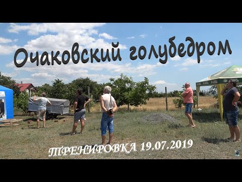 Очаковский голубедром. Тренировка голубей 19.07.2019