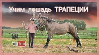 Видео-урок//Как научить лошадь трапеции