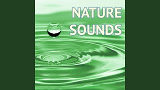 Provided to YouTube by The state51 Conspiracy True Tears (Under Water Sounds) · Deep Sleep Nature Sounds - Powerful Relaxing Sound of Nature Music to ...