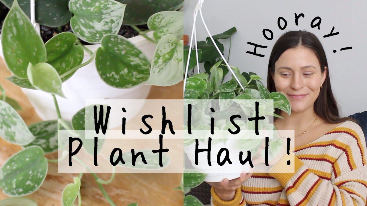 Uncommon WISHLIST Houseplant Haul! | New Indoor Plants I Bought!