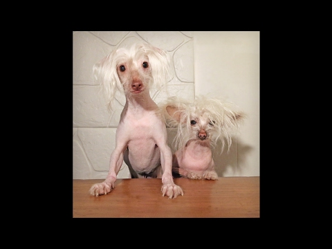 Ellen Westkaemper, Bald is Beautiful Dog Rescue + Dancing Nathan