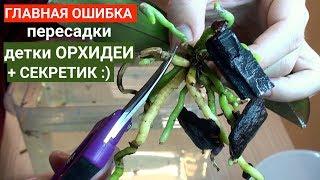 МАЛЕНЬКАЯ ОРХИДЕЯ ошибка и ЛАЙФХАК пересадки орхидеи