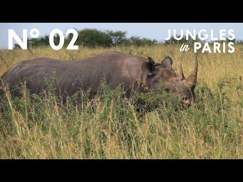 Tracking the Serengeti's Rare Black Rhinos (Lamai Triangle, Tanzania)