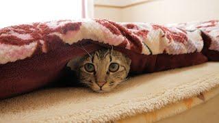 子猫が朝ごはんの時間なのに布団から出てきてくれません