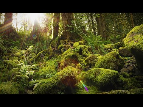 Download Lagu  Nature Therapy: Relaxing Full Motion Forestry with Natural Sounds Mp3 Free