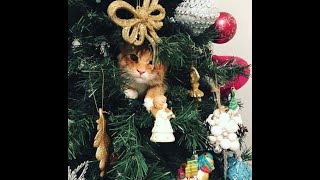 Cats vs Christmas Trees! (A Compilation)
