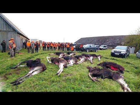 Охота #112 большая коллективная охота, потерял камеру
