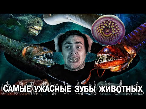 Самые зубастые Твари из ужасов - в Реальной жизни!