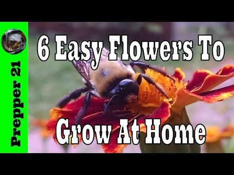 6 Easy Flowers To Grow At Home