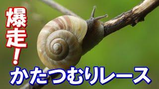【虐待?】かたつむりレース実況放送【キャラフレ】