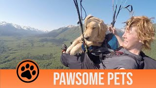 Pawsome Pets Episode One