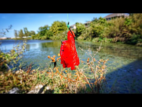 BEST Pond Catfish Bait In The WORLD!?! (2 TROPHY CATCHES)