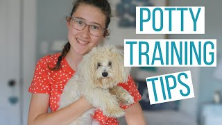 HOW TO POTTY TRAIN YOUR MALTIPOO PUPPY   6 Tips to Potty Train Your Dog Faster & Use a Potty Bell