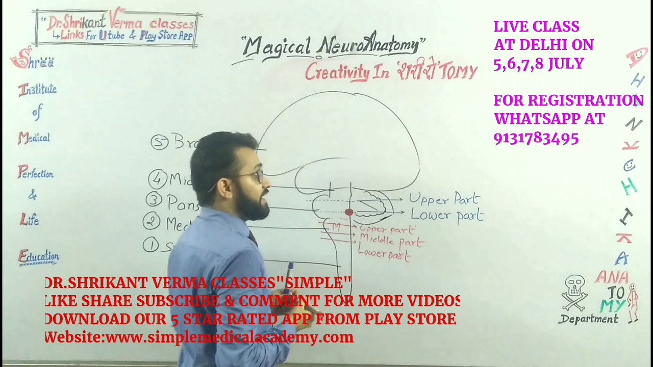 113. HOW TO READ PONS ?How to retain NEURO-ANATOMY in Mind (Part 2 ...