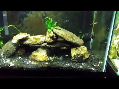 Brackish Water Change: How Important Is Stable Specific Gravity?