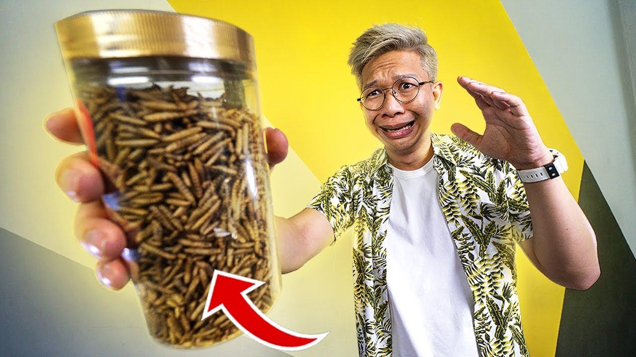 Makan Maggot yuk! rasanya kaya kacang!