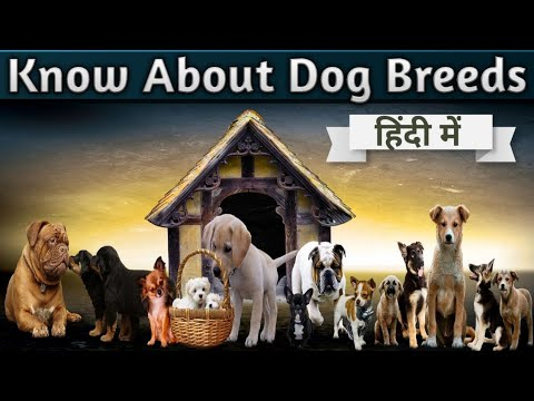 Know About Dog Breeds [Complete Information About Dogs]